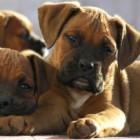 La función de las proteinas en la dieta de nuestra mascota.